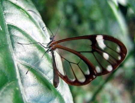http://img46.xooimage.com/files/0/c/5/mariposas-transparentes-08-15b5e8e.jpg
