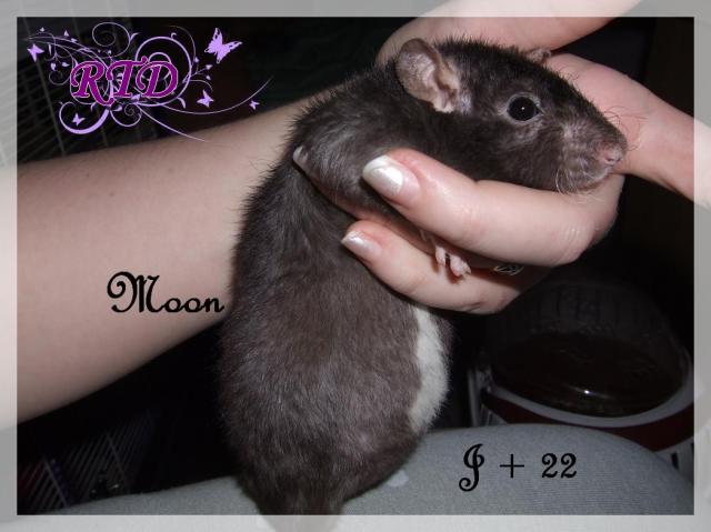 Portée Moon x Malabar, des petits chanceux Dscf8781-727889