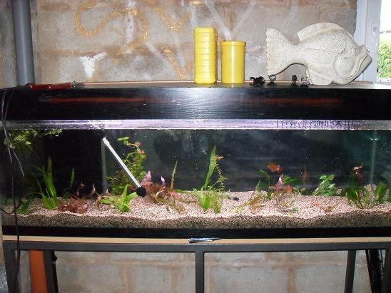 ma shrimproom et fishroom Sdc12063-1d0f3a3
