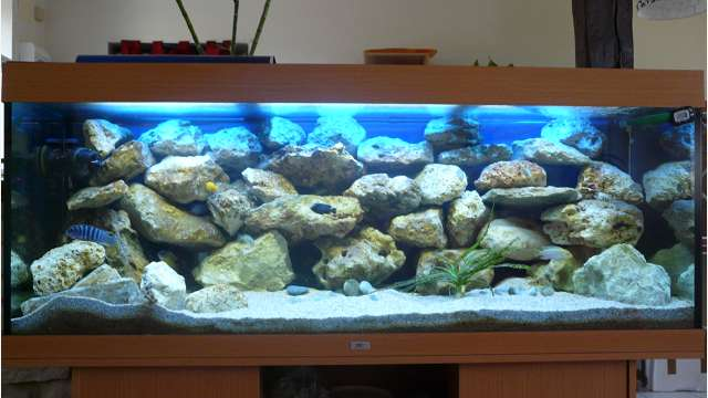 D coration aquarium malawi for Deco aquarium