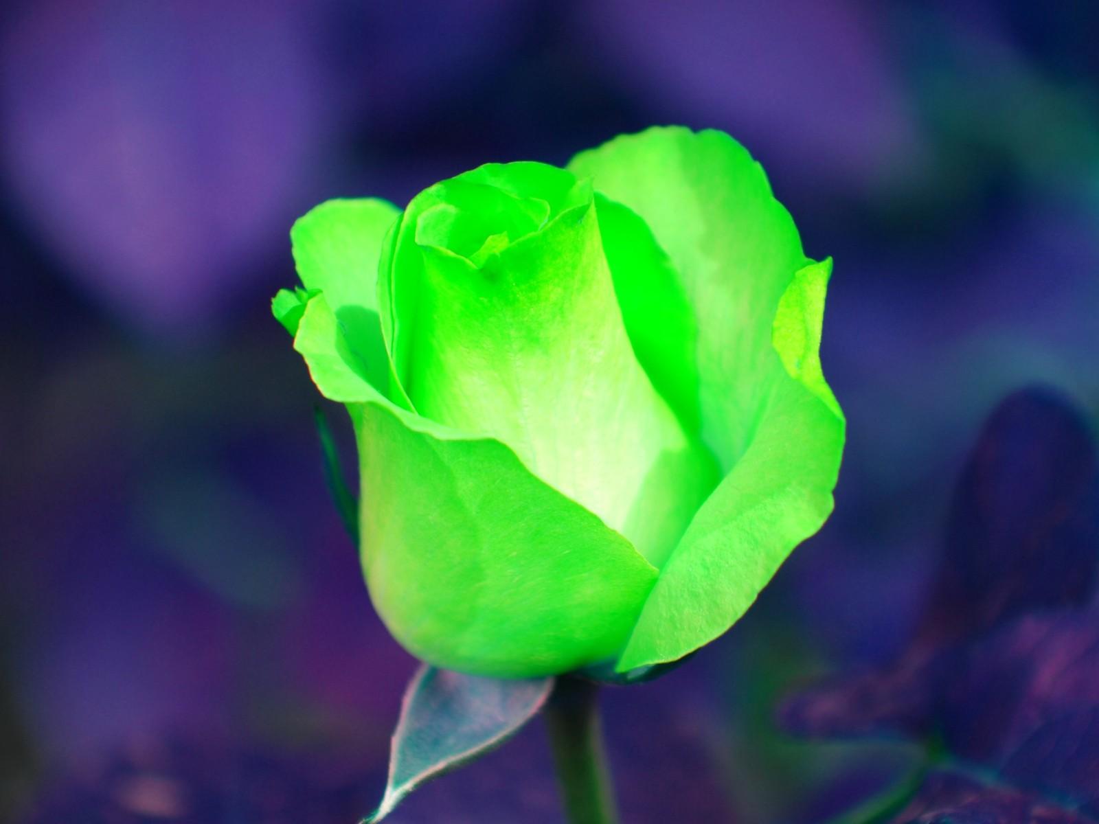 Красивая цветы зеленые