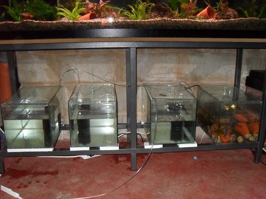 ma shrimproom et fishroom Sdc12127-1d75d37