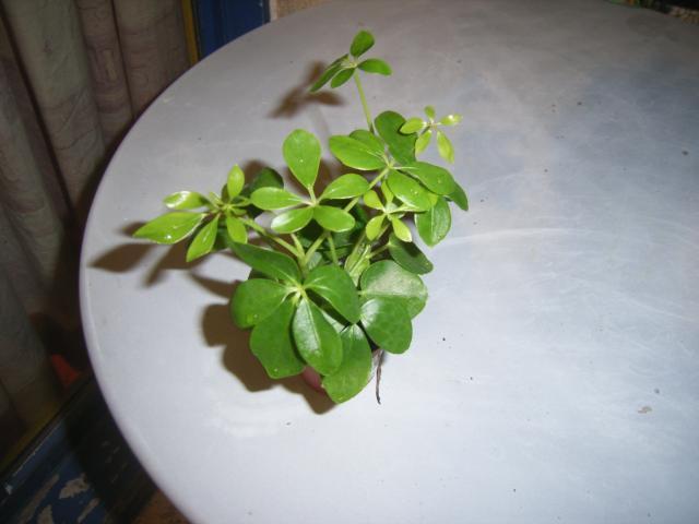 quel est le nom de cette plante puce sans tiquette. Black Bedroom Furniture Sets. Home Design Ideas