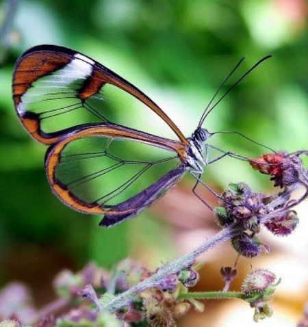 http://img46.xooimage.com/files/b/0/8/mariposas-transparentes-01-15b5e42.jpg